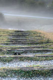 Punti in nebbia Fotografie Stock