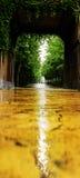Punti scenici in Hengdian, terra di contrasto della pianta fotografie stock libere da diritti