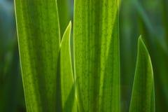 punti verdi di macro del foglio Fotografie Stock