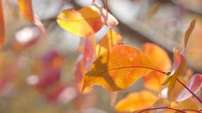 Puntilla con las hojas amarillas imagen de archivo libre de regalías
