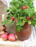 Puntilla de escaramujos con una fruta en la jarra Fotos de archivo libres de regalías