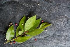 Puntilla de la hoja y de la pimienta frescas de laurel en fondo de piedra negro Foto de archivo