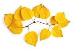 Puntilla del abedul con las hojas amarillas Fotografía de archivo libre de regalías