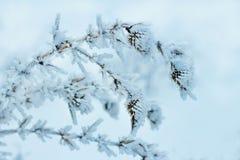 Puntilla del invierno de plantas silvestres en escarcha en el fondo blanco de la nieve imagen de archivo