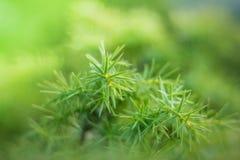 Puntillas verdes en el pote Imagen de archivo