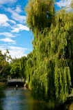Punting on the Avon River. In Christchurch, New Zealand Royalty Free Stock Photos