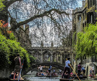 Punting in Cambridge. Several punts on the river Cam in a sunny spring day Royalty Free Stock Image