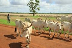 Punto africano di giro immagine stock