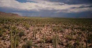 Punto bajo del vuelo del abejón sobre campo atmosférico del desierto del cactus hacia las nubes grandes de la tempestad de arena  almacen de metraje de vídeo