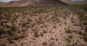 Punto bajo del vuelo del abejón sobre paisaje gigante del paisaje del campo del desierto del cactus del Saguaro en la reserva épi metrajes