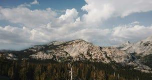 Punto bajo del vuelo del abejón sobre sorprender árboles de pino antiguo hacia el canto blanco del pico de montaña en el parque n almacen de metraje de vídeo