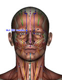 Punto BL2 Cuanzhu de la acupuntura Fotos de archivo