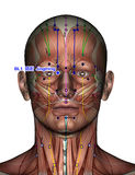 Punto BL1 Jingming de la acupuntura Imagen de archivo libre de regalías