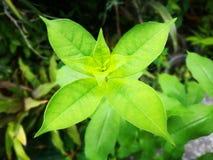 Punto che mette a fuoco avanti sui permesso-germogli di verde da 4 foglie in ogni livello Concetto di simmetria immagine stock