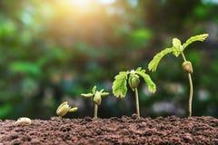 punto crescente di semina della pianta con luce solare concetto di agricoltura dentro fotografia stock