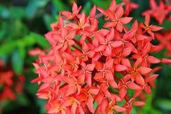 Punto de la flor Fotografía de archivo libre de regalías