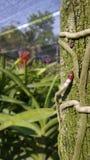 Punto de la orquídea Foto de archivo