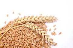 Punto de los granos y de los cereales del trigo Trigo aislado en el fondo blanco Imagen de archivo libre de regalías