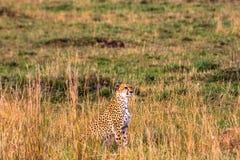 Punto de observación en Masai Mara Kenia, África Foto de archivo