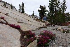Punto de Olmsted - Yosemite Fotografía de archivo libre de regalías