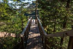 Punto de vista, bosque, naturaleza pura, Tatras del oeste, Eslovaquia Fotos de archivo