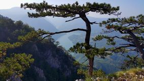 Punto de vista de la montaña Tara Foto de archivo