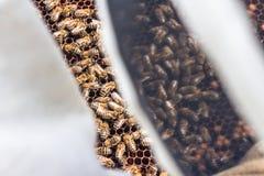 Punto de vista del apicultor Fotos de archivo