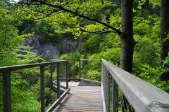 Punto de vista, valle, naturaleza pura, Tatras del oeste, Eslovaquia Imágenes de archivo libres de regalías