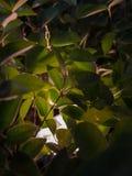 Punto del proyector en las hojas en la oscuridad foto de archivo