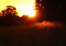 Punto del punto nel tramonto Fotografia Stock Libera da Diritti