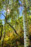 Punto del Sun Fotografia Stock