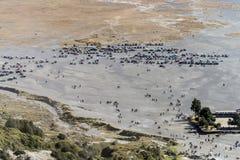 Punto della riunione per i turisti ed i cavallerizzi in mare della sabbia al bromo del supporto Immagini Stock
