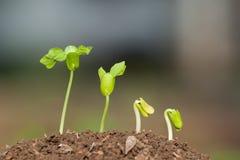Punto di crescita Immagini Stock Libere da Diritti
