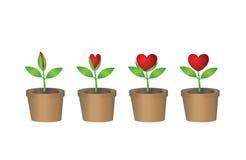 Punto di fioritura della pianta del cuore Illustrazione Vettoriale
