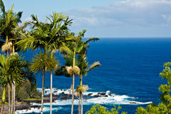 Punto di Laupahoehoe, Hawai Fotografia Stock