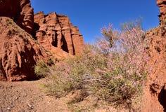 Punto di riferimento naturale famoso chirghiso di Grand Canyon con le rocce dell'arenaria rossa della gola di Konorchek, regione  immagine stock libera da diritti