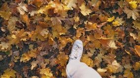 Punto di vista al piede maschio che fa un passo sulle foglie cadute colore Uomo che cammina alla foresta di autunno su fogliame g stock footage