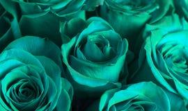 Punto di vista alto vicino di Teal Roses fotografia stock