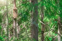 Punto di vista dei boschetti densi della foresta attillata densa con gli aviari fotografia stock