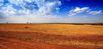 Punto di vista dei masai Mara (Kenia) Immagini Stock Libere da Diritti