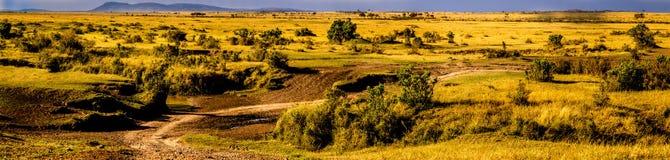Punto di vista dei masai Mara (Kenia) Immagine Stock