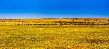 Punto di vista dei masai Mara (Kenia) Fotografia Stock Libera da Diritti