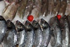Punto di vista dei pesci freschi sul ghiaccio Fotografia Stock