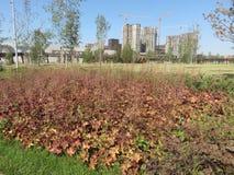 Punto di vista del fondo dell'erba asciutta e costruzione delle case fotografie stock libere da diritti