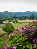 Punto di vista del paese della montagna con i fiori Immagini Stock Libere da Diritti