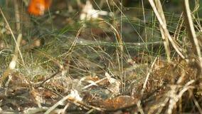 Punto di vista del primo piano di bella erba selvatica fresca luminosa Profondità del campo poco profonda stock footage