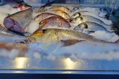 Punto di vista del primo piano dei pesci freschi e crudi Fotografia Stock Libera da Diritti
