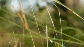 Punto di vista del primo piano di erba selvatica nella profondità di campo bassa della foresta di primavera stock footage