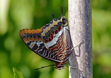 Punto di vista del primo piano di una farfalla sul ramo fotografia stock libera da diritti