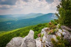 Punto di vista del Ridge e degli appalachi della valle dalla manopola di Tibbet, nel G Fotografie Stock